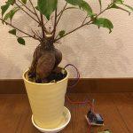 土壌湿潤観測デバイス